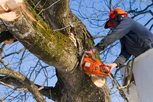 Tree Removal With Chainsaw
